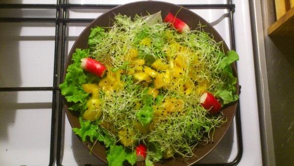 Salade poivrons alfafa radis
